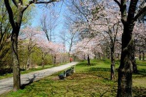 Springtime_in_Toronto